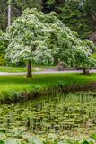 Trees, walk way and lake in Botanic Garden. Dublin, Ireland royalty free stock photos