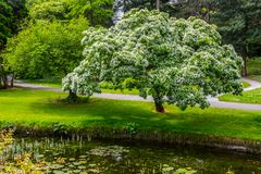 Trees, walk way and lake in Botanic Garden. Dublin, Ireland royalty free stock photo