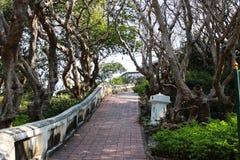 Trees beside walkway Stock Photo