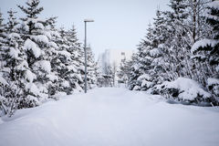 Trees and walkway in snow. Trees and walkway covered with snow in Reykjavik, Iceland Stock Image
