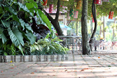 Trees and walkways in the park with tables placed. Stock Photo
