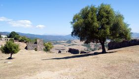 Trees in a wall castle. Landscape of fields seen from the top of the castle of Jimena de la Frontera in the Spanish province of Cadiz. In the foreground are two Stock Photos