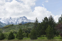 Trees in the wasatch mountains mountain top Royalty Free Stock Image