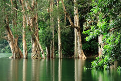 Trees in water. Trees reflecting on the water surface Royalty Free Stock Photography