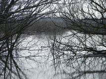 trees in the water royalty free stock photo