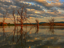 Trees in the water. In Tundzha river in Bulgaria Stock Photography