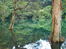 Trees and Water. Landscape of trees and jungle reflect on the water Royalty Free Stock Images