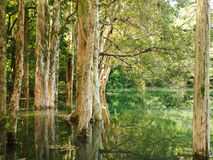 Trees and Water. Landscape of trees and jungle reflect on the water Stock Photo