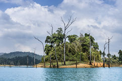 Trees in the water - Cheow Lan Lake, Thailand. Unusual frontal view of some trees in the water in the middle of Cheow Lan Lake near Khao Sok in Thailand Royalty Free Stock Image