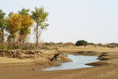 Trees and water in desert Royalty Free Stock Photography