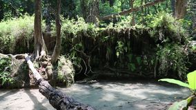 Trees and water in Erawan National Park, western Thailand. Trees and water in Erawan National Park in western Thailand. Video with stereo sound stock footage