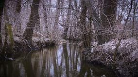 Between trees water flows stock video