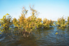 The Trees in the Water. At the Kinneret Lake. Israel Stock Photography