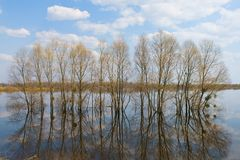 Trees in water-meadow Stock Photo