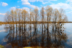 Trees in water-meadow Royalty Free Stock Images