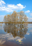 Trees in water-meadow Royalty Free Stock Photo