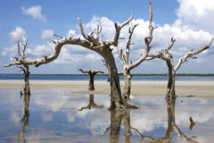 Trees in water. Ocean india Royalty Free Stock Photos