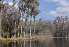 Trees and water in the Okefenokee swamp Stock Photography