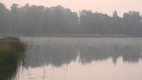 Trees and water plants near pond lake on foggy early autumn morning. 4K stock video footage