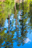 Trees Water Reflection Stock Images