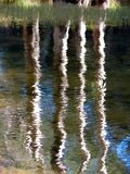 Trees water reflection Royalty Free Stock Images