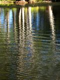 Trees water reflection Royalty Free Stock Photo