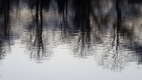 Trees in water reflection Stock Photo