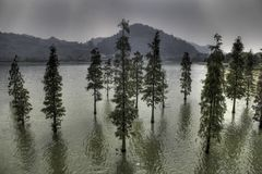 Trees on water Stock Photography