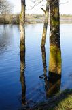 Spring time in Killykeen forest park Royalty Free Stock Photos