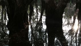 Trees in the water. In Thailand stock video footage