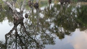 Trees in the water. In Thailand stock footage