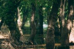 Trees on water vintage look Royalty Free Stock Image