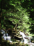 Trees in waterfall Stock Photo