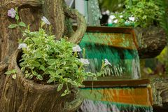 Trees in the waterfall garden. At garden Stock Photo