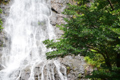 Trees and waterfalls Stock Photography