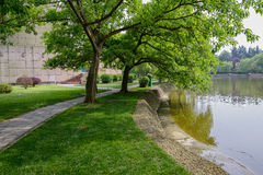 Trees at waterside in sunny spring Stock Images