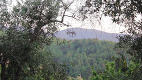Trees and mountain landscape. Trees waving in the wind with mountain in the background stock footage