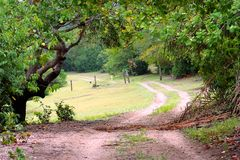 Trees way. In field - Amazonia - North of Brazil Royalty Free Stock Photos
