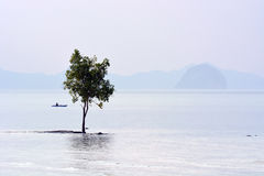 Trees were flooded along the beach,Trees in the sea Royalty Free Stock Photo