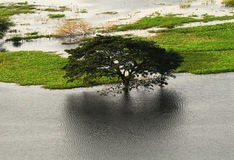 Trees were flooded in the rainy season in Thailand Stock Image