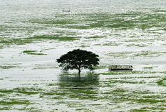 Trees were flooded in the rainy season in Thailand Stock Photos