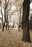 When trees were great... (2). A small boy surrounded by large trees Royalty Free Stock Photo