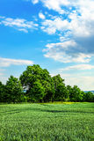 Trees by wheet field Royalty Free Stock Photography