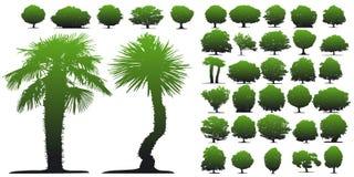 Trees on white background vector illustration