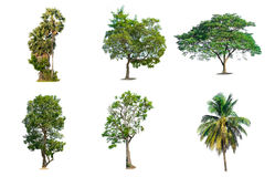 Trees on white background. Tree nature on white background of Isolated Stock Photography