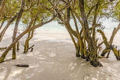 Trees on a white beach Royalty Free Stock Images