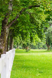 Trees with white fence Royalty Free Stock Photography