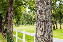 Trees with white fence Royalty Free Stock Photos