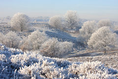 Trees upon the white hills Stock Image