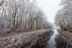 Trees in a white winter landscape Stock Image